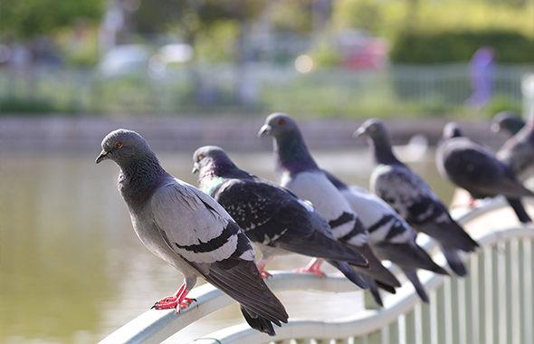 ハトよけはダイソーの防鳥ネットがオススメ!100均で買える商品4選